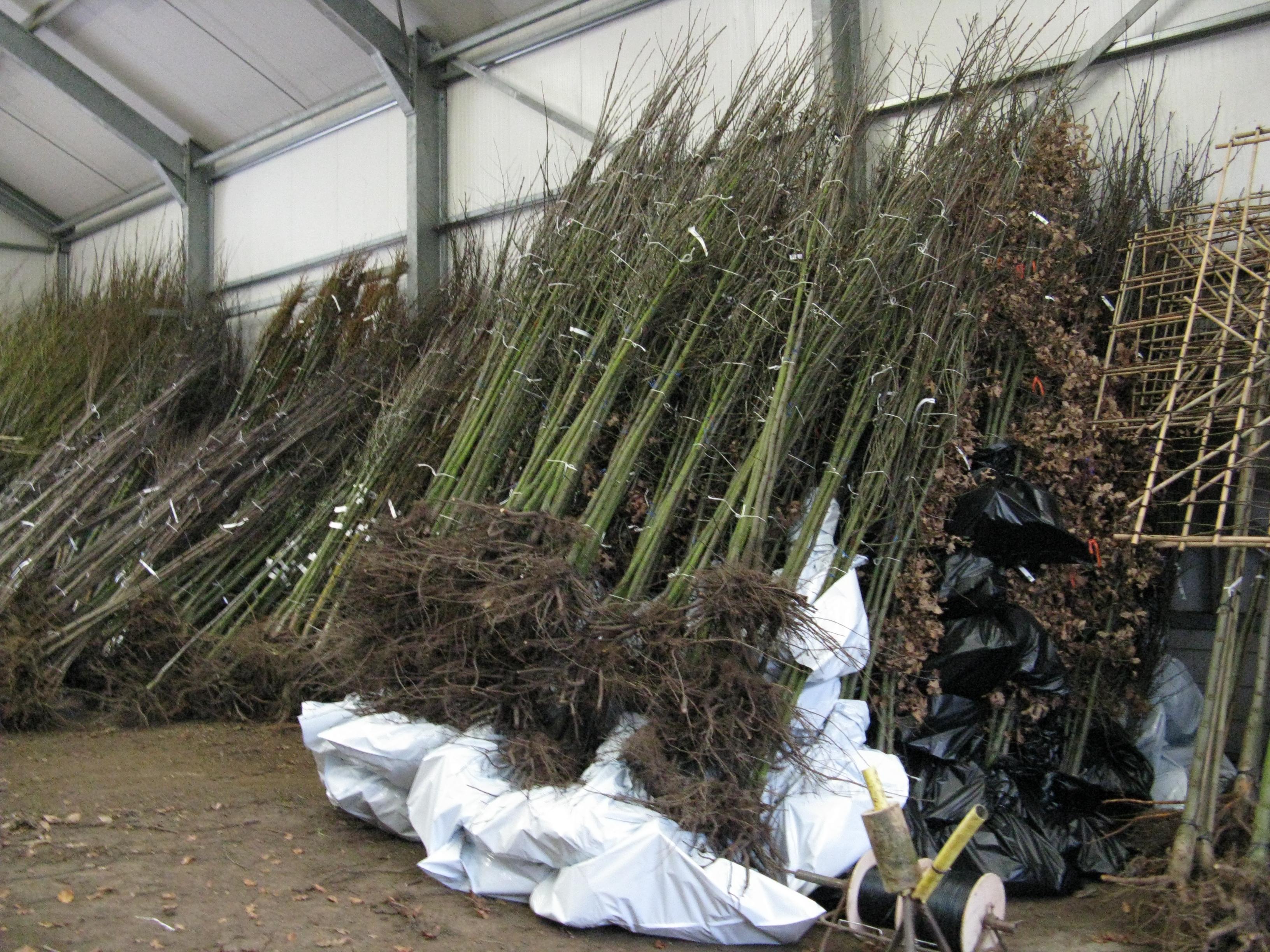 Wij zijn een boomkwekerij die oog heeft voor mens, natuur